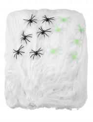 Hämähäkinseitti ja hämähäkkejä, 500 g