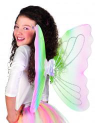 Värikkäät perhosen siivet 56 x 46 cm