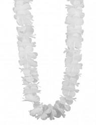 Hawaiji koru valkoinen