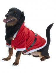 Jouluasu koiralle
