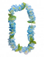 Hawaiji koru sininen