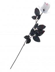 Verinen ruusu