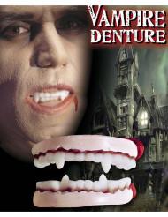 Vampyyrin hampaat - Asusteet aikuisille