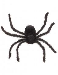 Suuri, musta hämähäkki