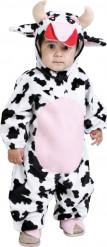 Lehmäasu vauvoille