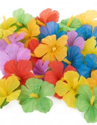 Havaijilaiset kukat 24 kpl