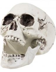 Pääkallo 24x18cm - Halloween koriste