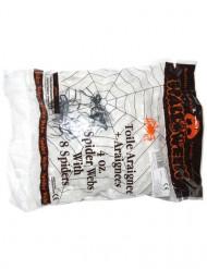 Hämähäkinseitti ja 4 hämähäkkiä