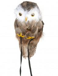 Pöllö - Halloween koriste