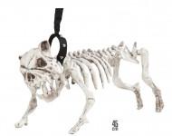Koiran luuranko talutushihnassa