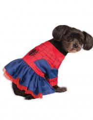 Spider Girl™ -naamiaisasu koirille