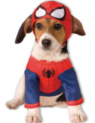 Koiran Spiderman™-puku