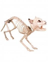 Luurankokissa - Halloween koriste