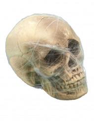Pääkallo ja hämähäkinseitti - Halloween koriste