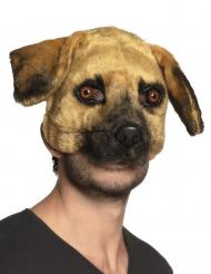 Koiranaamari aikuiselle
