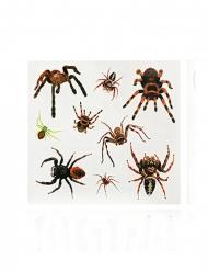 Hämähäkki- tekotatuoinnit