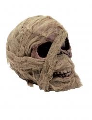Muumion pääkallo 20 x 16 cm