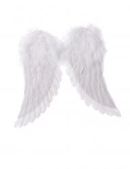 Valkoiset enkelin siivet 42 x 46 cm