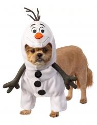 Olaf™- Frozen- naamiaisasu koiralle