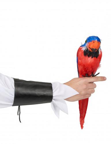 Värikäs papukaija